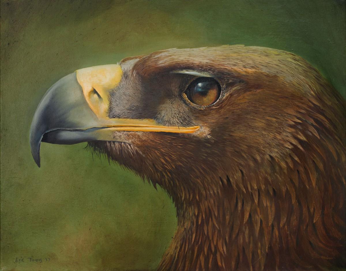 Eric Timms - Golden Eagle Eye