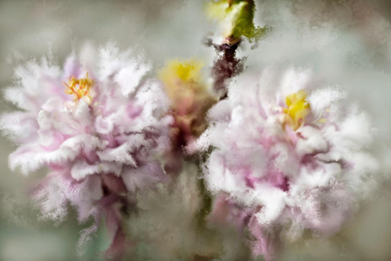 Gillian Hunt - Spring